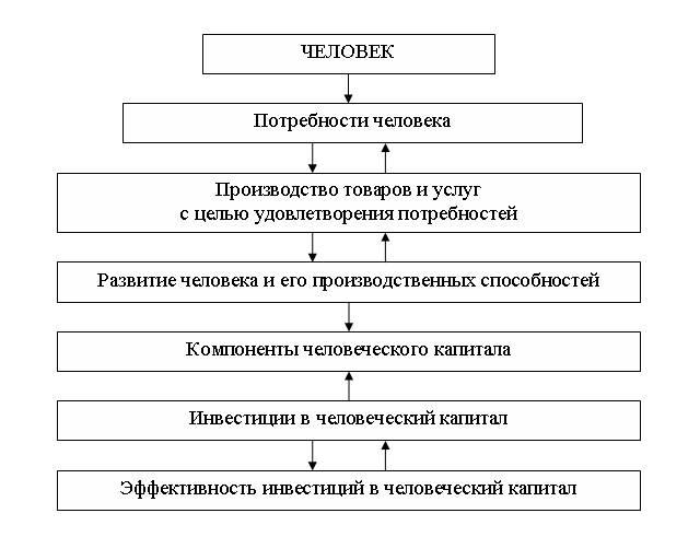 Структура инвестиций в человеческий капитал