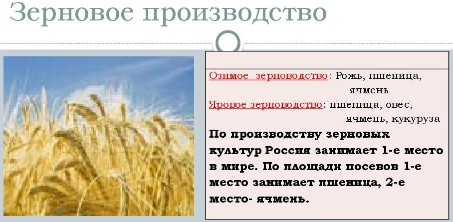 Зерноводство в россии